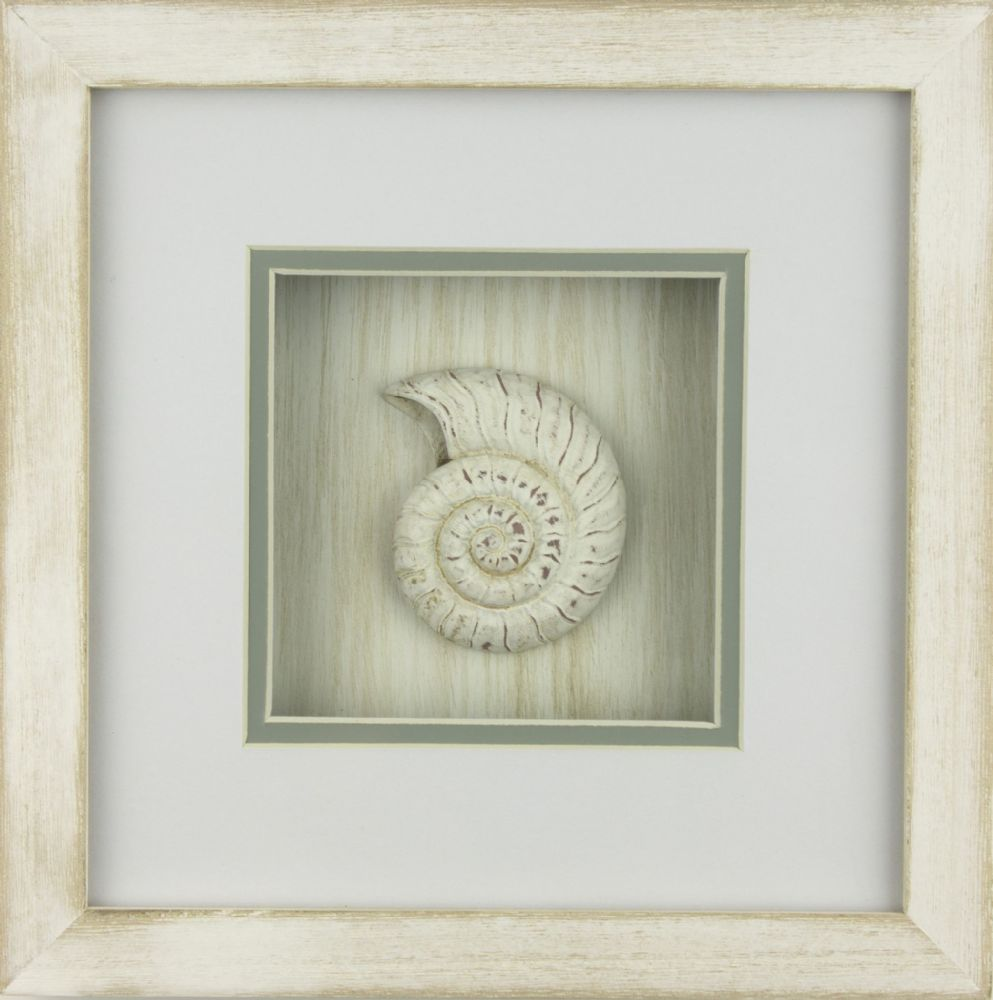 Nautilus Shell In White Wash Distressed Wooden Frame Coastal Wall Decor
